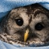In pictures: Animals who know winter is here