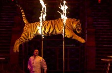 New welfare bill will not ban animals performing in circuses - Coveney