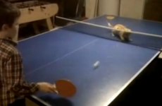 VIDEO: Lonely boy plays cat at tabletennis... and loses