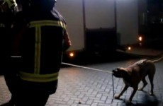 Look at this brilliant dog helping the firemen