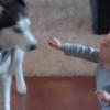 VIDEO: Baby talks to dog... dog talks back