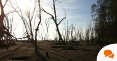 Photo essay: El Salvador's mangroves disappear as sea levels rise