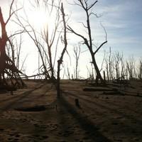 Photo essay: El Salvador's mangroves disappear as sea levels rise
