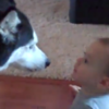 Look at this dog and baby having a chat (VIDEO)