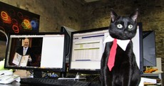 Steve the Cat has just heard about the €1 wine increase...
