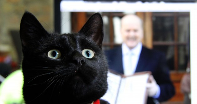 The day Steve the Cat came to our office… in photos