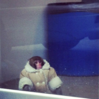 Monkey found at Ikea... wearing nice warm coat and nappy