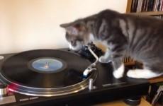 This Irish cat has over 2.4 million views on YouTube