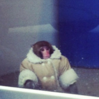 Ikea Monkey's owner mounts protest to get him back