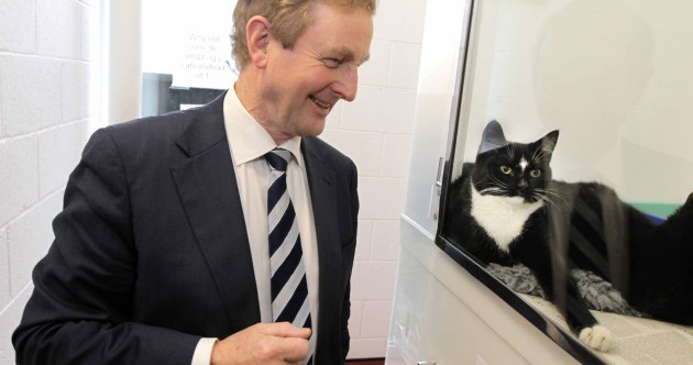 Pics: Enda Kenny stroking a dog and looking at cats