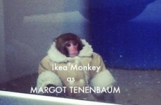 Our favourite Ikea Monkey tributes so far