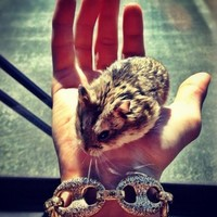 Justin Bieber accused of animal cruelty against his pet hamster