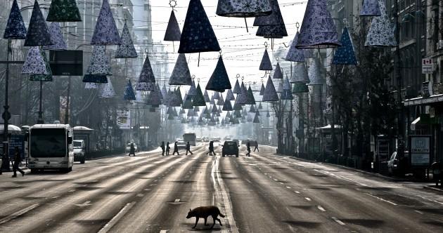 The week in photos: Deep winter
