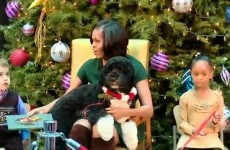 VIDEO: The Obama family dog will sit where he likes, dammit