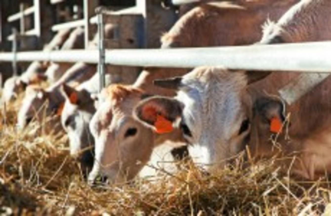 Newborn calves to undergo mandatory tests for bovine diarrhoea