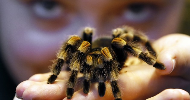 Spiders, monkeys and muddy frogs: pics from London Zoo's stocktake