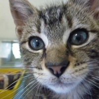 DSPCA issue urgent foster appeal for cats