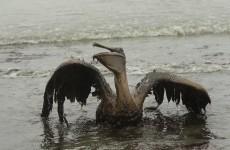 Transocean fined $1.4 billion over Deepwater Horizon