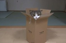 It's almost the weekend... here's a video of one cat and his box