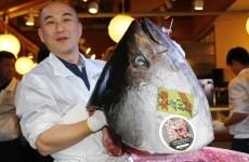Giant tuna sells for record €1.3 million in Japan