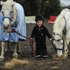 Increase in numbers of horses, ponies and foals abandoned in 2012