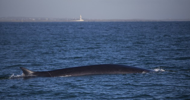 First whales of the year spotted off Wexford coast