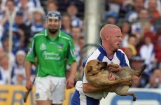 Get that dog off the pitch...