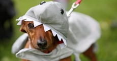 7 dogs and cats humiliated on National Dress Up Your Pet Day