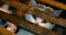 Hundreds of abandoned cats saved after China truck accident