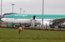 Begg appointed to Aer Lingus board as talks continue