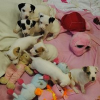 25 puppies surrendered to Dogs Trust in 6 days