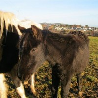 Call for centralised database as starving horses abandoned