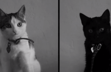 Watch: The five cat videos shortlisted for the Catdance Film Festival