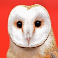 15 people who've already made that insufferable 'Superb Owl' joke
