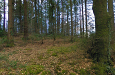 Man arrested over discovery of body in Wicklow woodlands