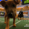Puppy Bowl is an actual real thing which 10 million people watch