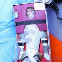 Iran's space monkey doesn't look happy