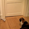 Take a break and watch this video of Cat versus Baby Sock