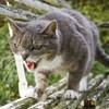 Cats are on a murderous rampage (in the USA)