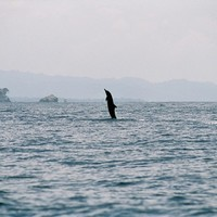 Australia saves 150 dolphins from shallow water