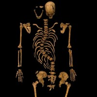 Skeleton found under car park is King Richard III, say archaeologists