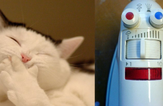 7 cats who are delighted with the new Monopoly (and 3 irons that are not)