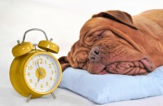 Poll: Are you a snoozer?