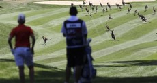A mob of kangaroos delayed a golf tournament in Australia