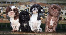 New life for rescued Leitrim dogs as they are rehomed
