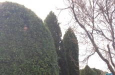 Forget Planking, Horsemaning and Owling…. Hedge Facing is the new thing