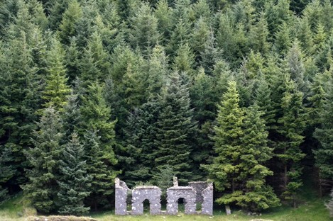 Pine woods in the Wicklow Mountains (File photo)