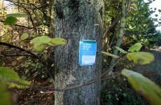 46 confirmed cases of ash dieback in Ireland