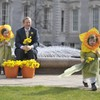 Where does Daffodil Day money go to?