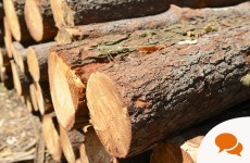Column: Upcoming EU timber regulations are two steps behind environmental reality